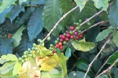Kaffeezone